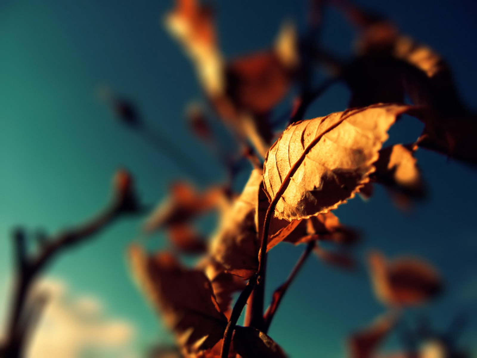 Nature and autumn, wallpaper, a dried leaf on a tree