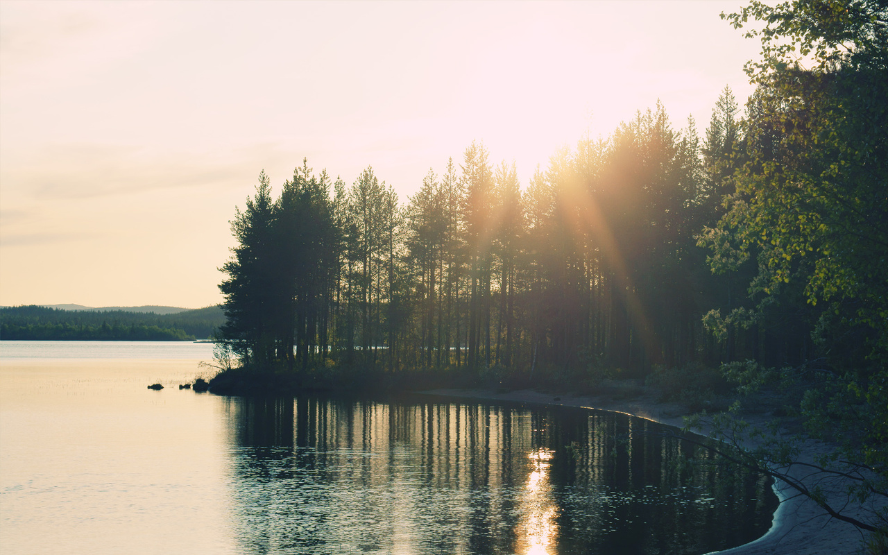 nature, forest, lake, light
