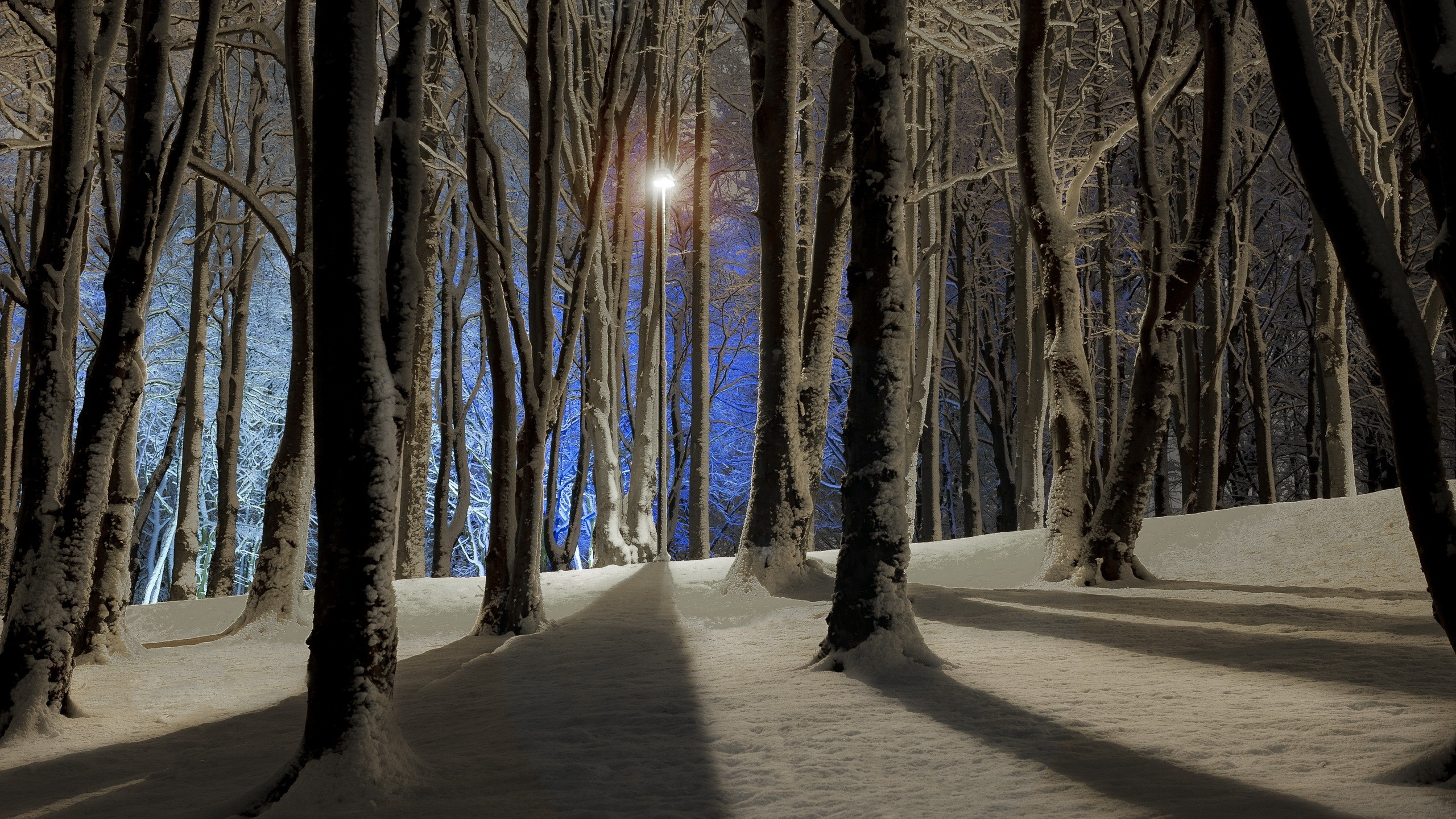 Night in the winter forest