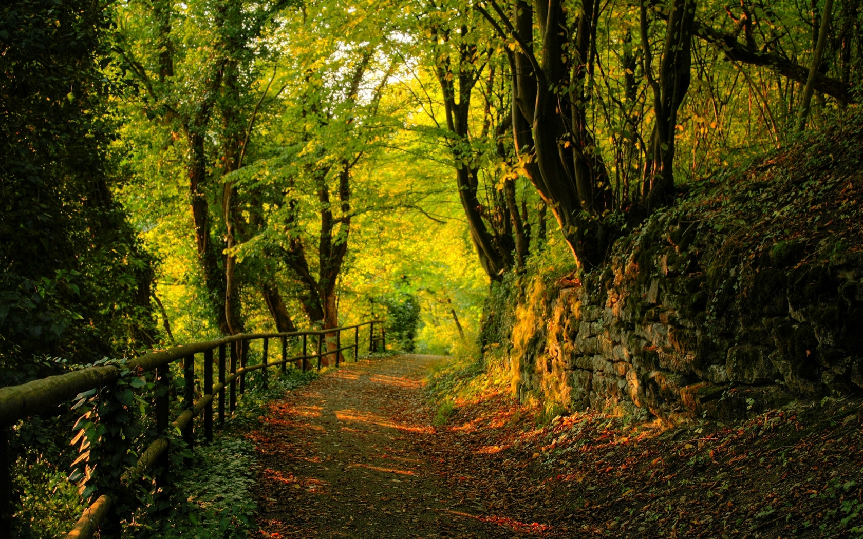 Old autumn trail