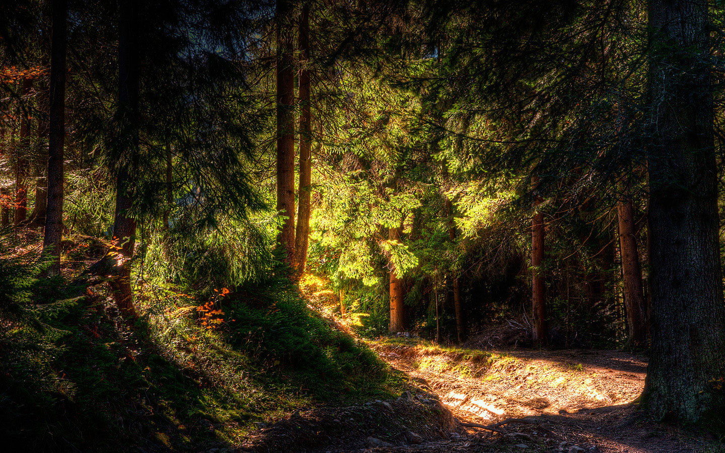 Photo beautiful spruce forest