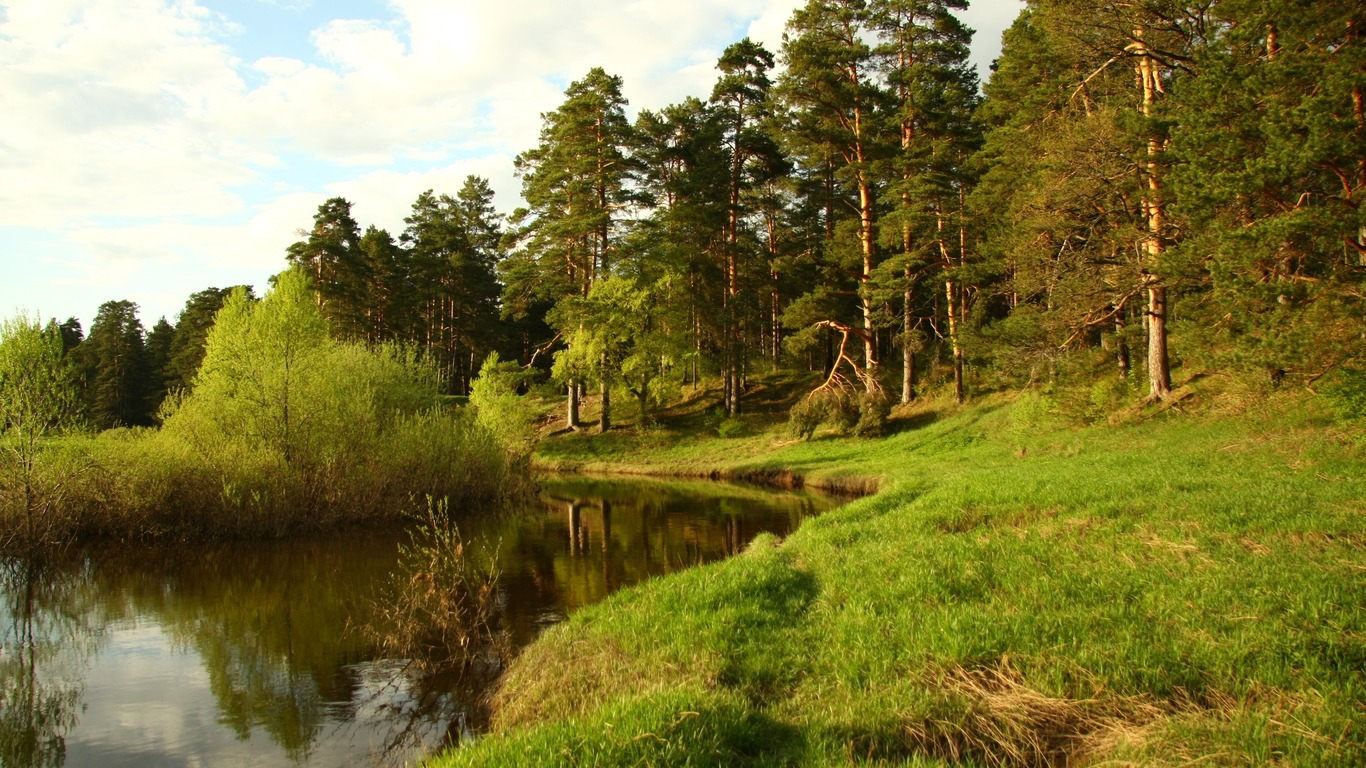 Pine Forest River