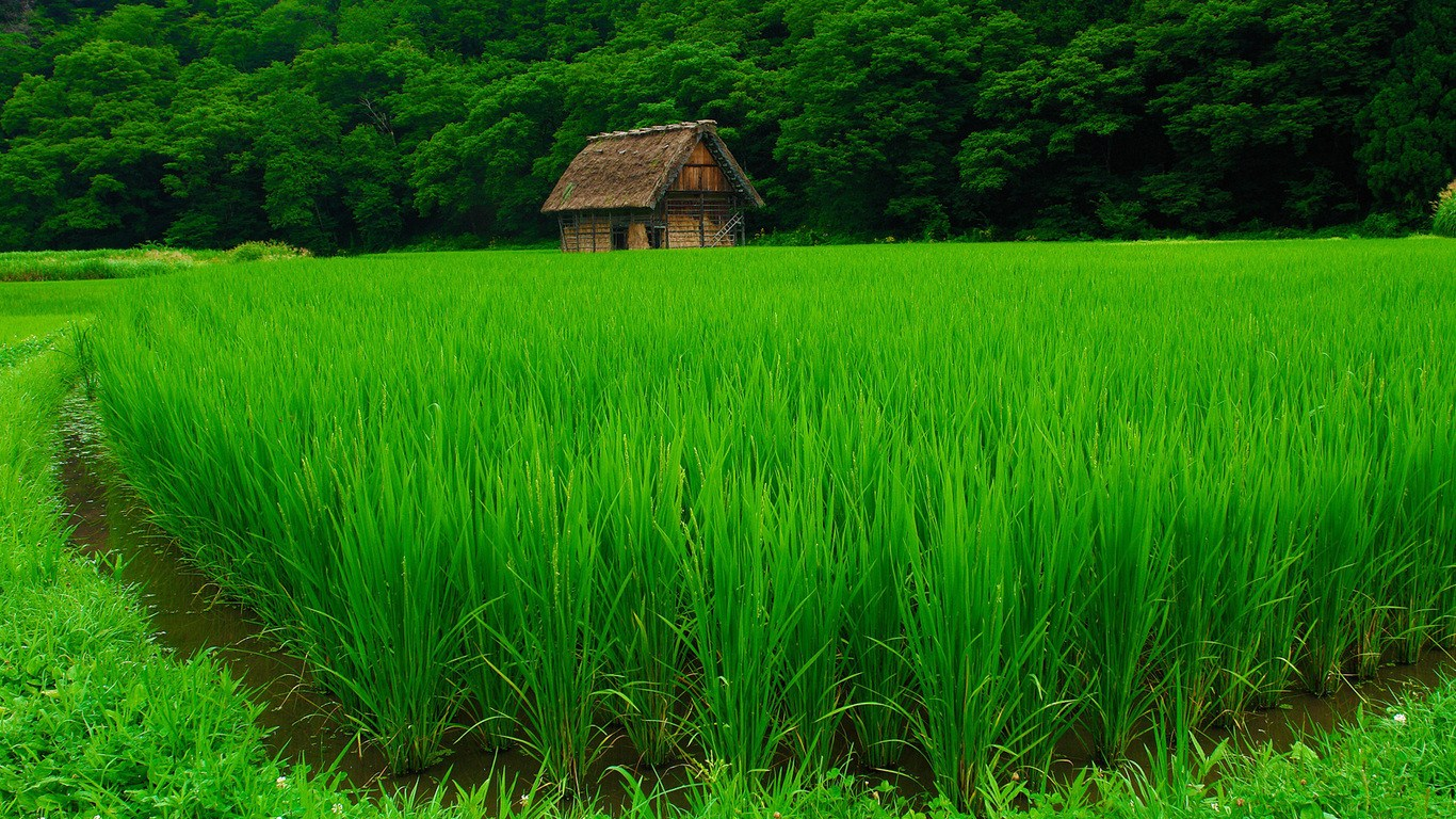 Small house greens