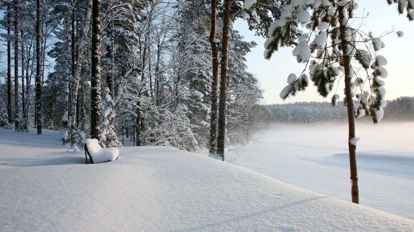 Snow in the forest trees