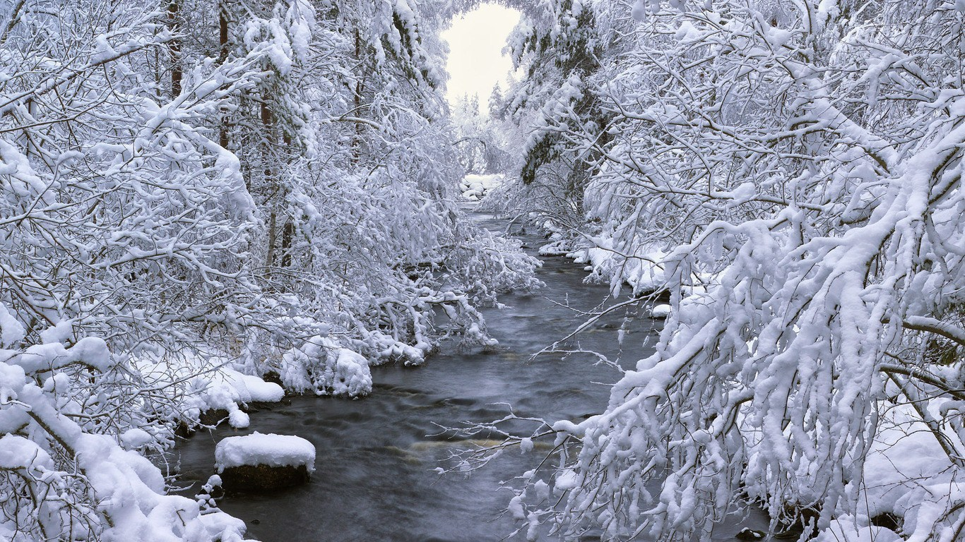 Snow trees river