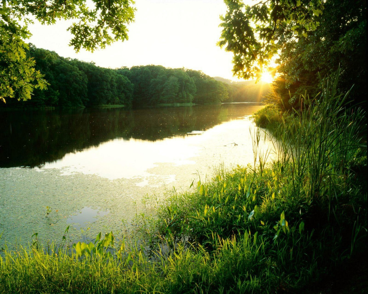 Sun, air, greenery and water photo as wallpaper for your desktop