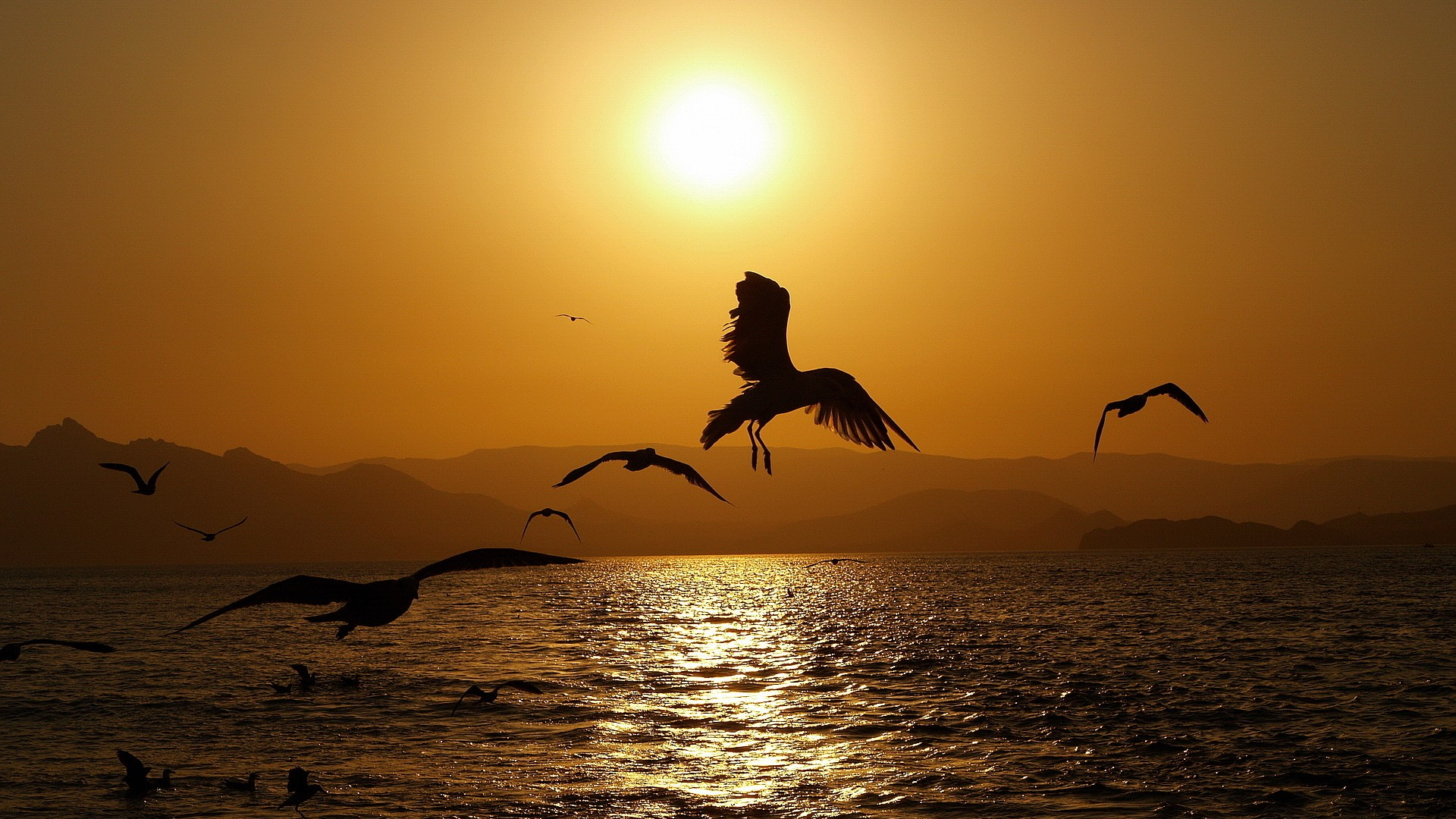 Sunset on the lake and gulls over water