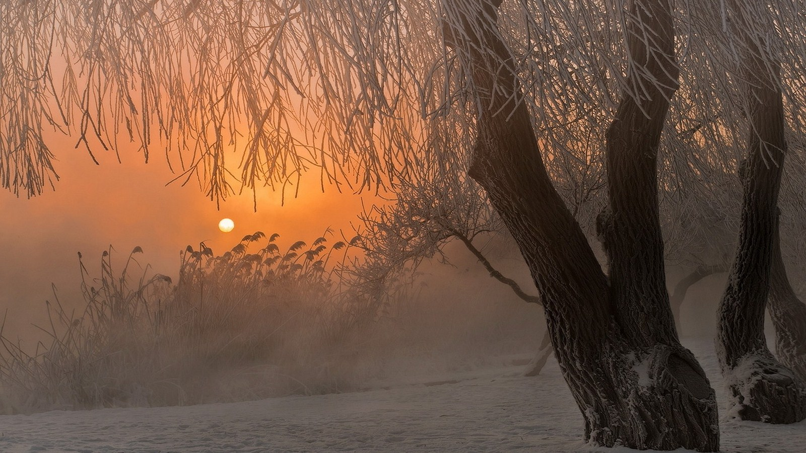 Sunset trees frost