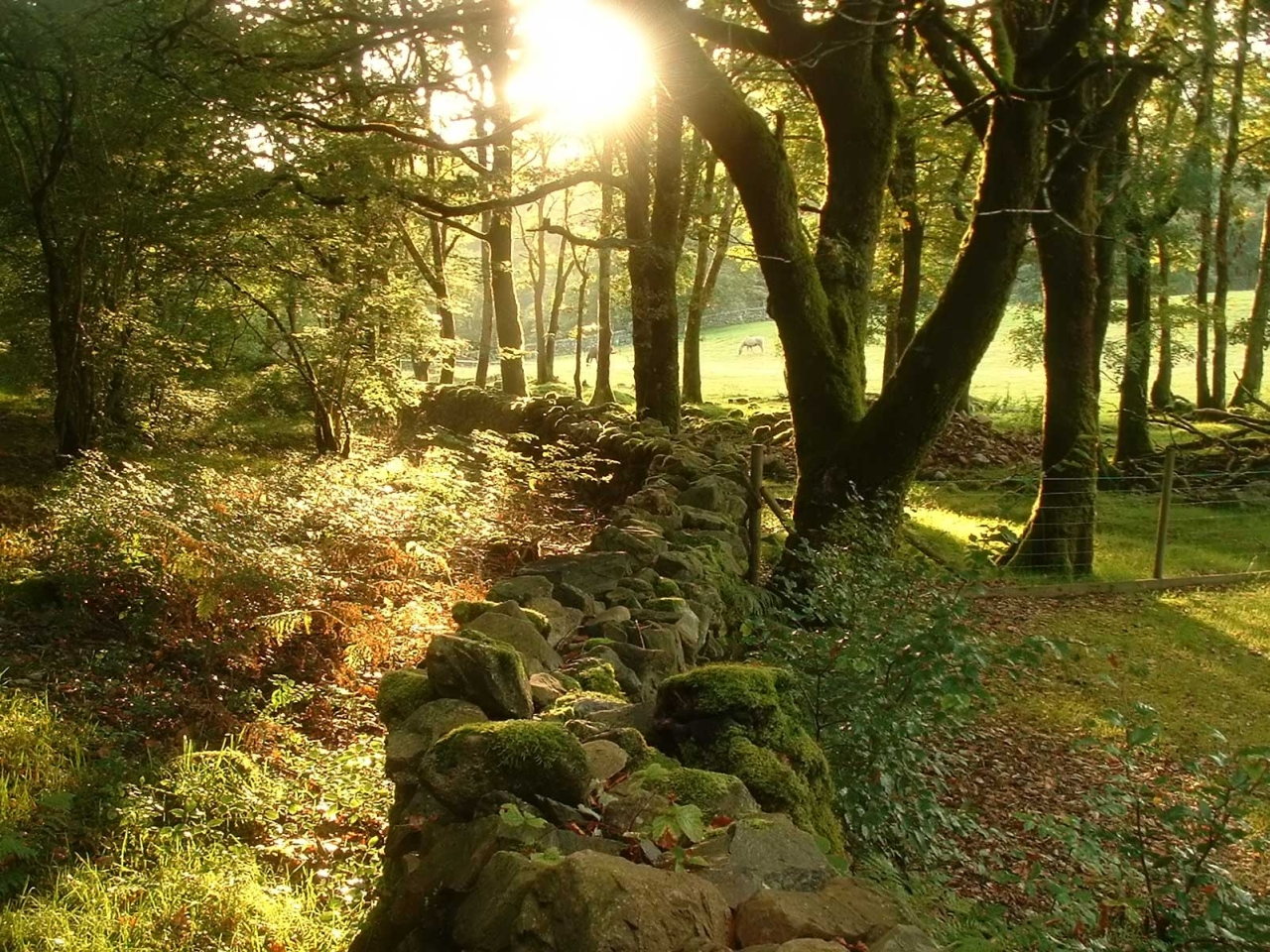 The stone fence in the forest