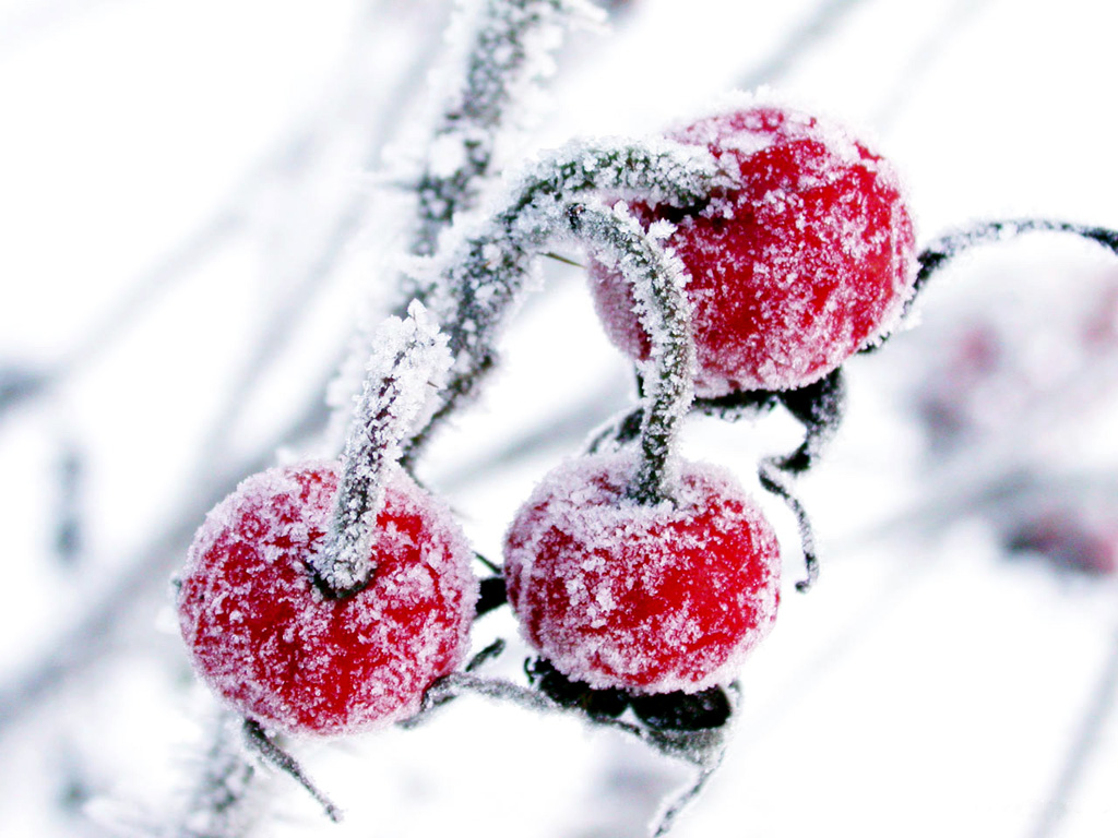 winter cherry