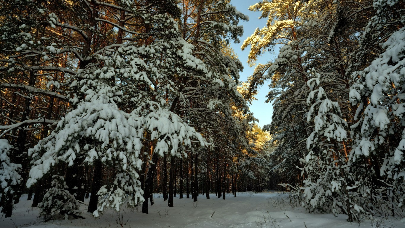 Winter forest landscape