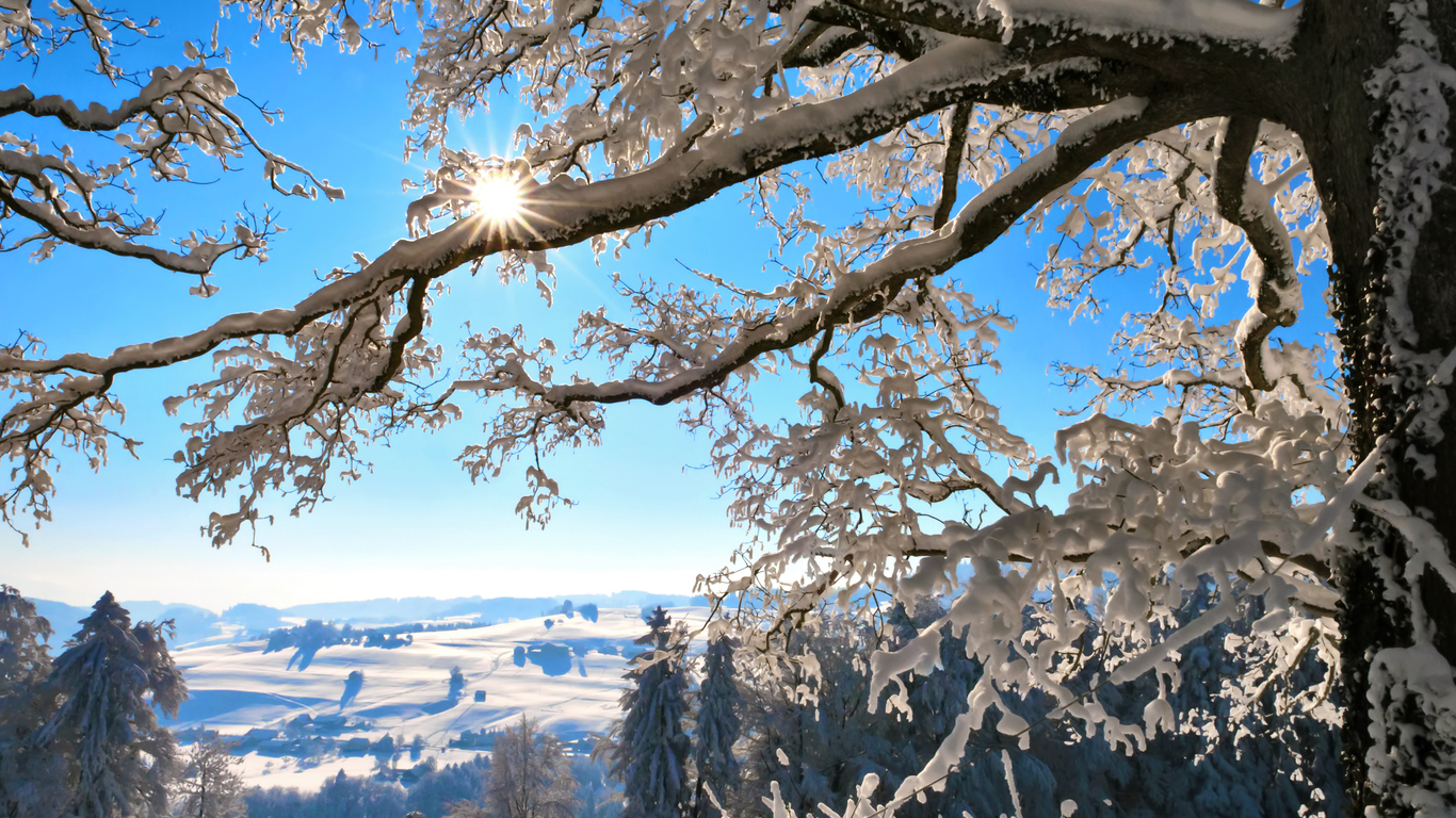 Winter morning, the snow on the tree