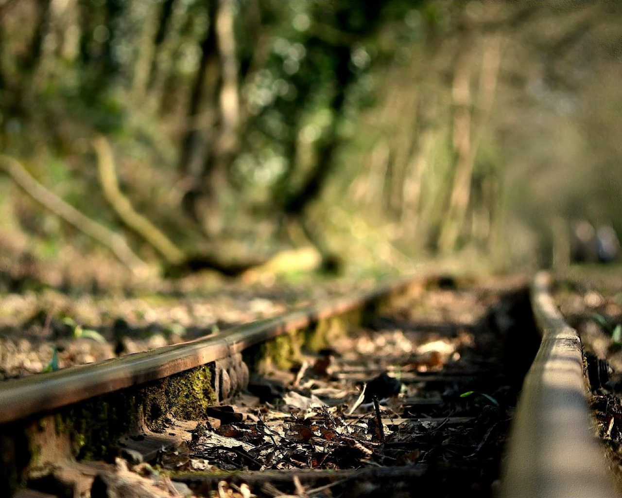 Rails - the old railway in the forest, wallpaper, picture