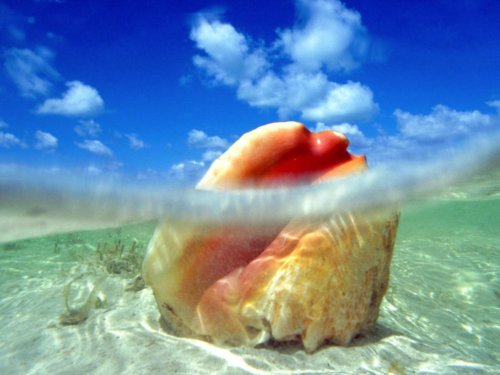 Shell in the sea water background for your desktop