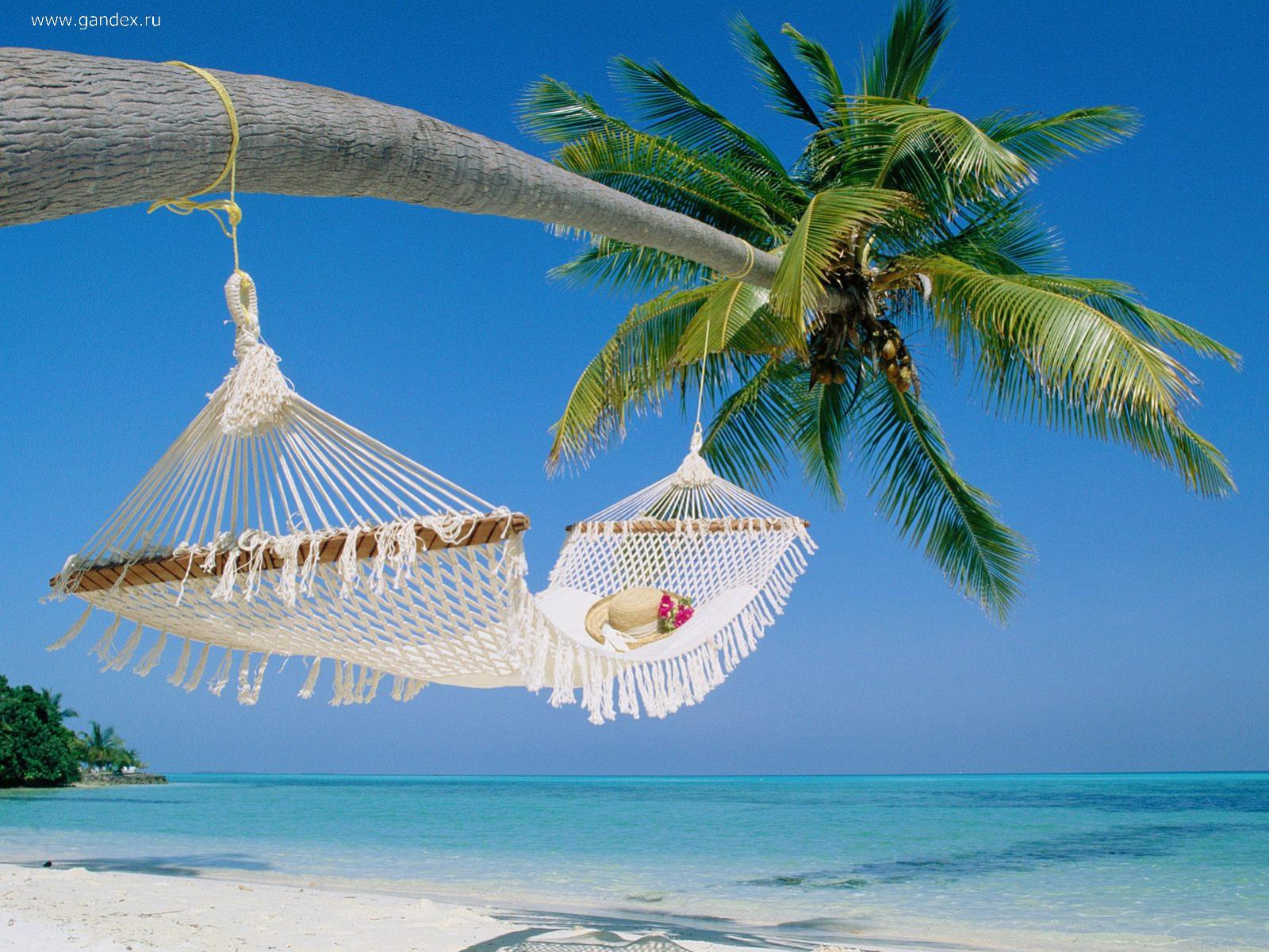 Palm tree and a hammock on the beautiful shores of the islands, the Maldives, Wallpaper.