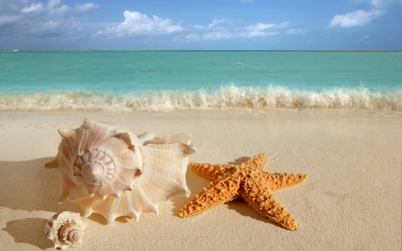 Starfish and sea shell